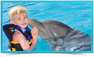 Actividades Nados delfines Dolphin Encounter Six Flags México