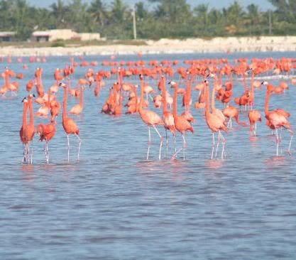 flamingos-at-ria-largatos.jpg picture by berthis_photos