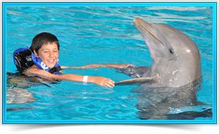 Actividades Nados Royal swim Six Flags México